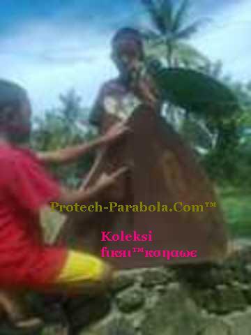 Dish yang peot atau kembung di ketok ketok menggunakan Palu atau Kayu secara perlahan-lahan